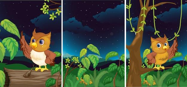 Scene della foresta con gufi carini