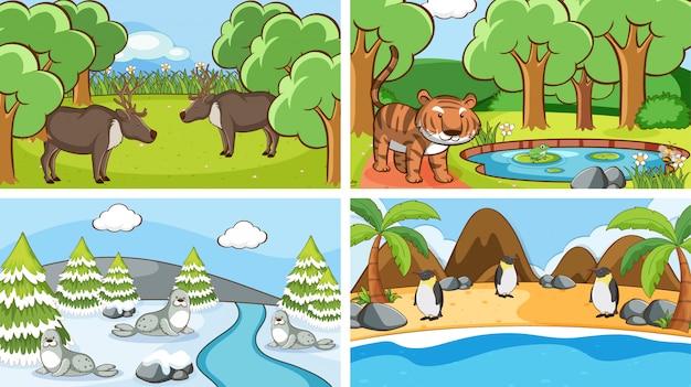 Scene di animali allo stato brado