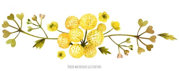 Scenetta di piante selvatiche di prato