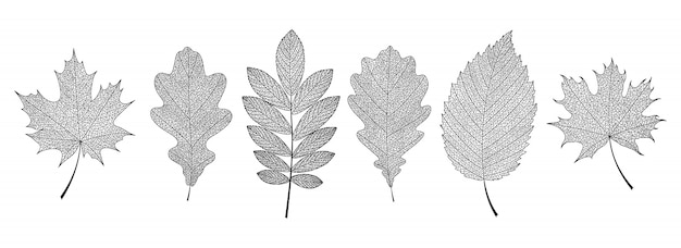 Scheletri di foglie nere disegnate a mano.