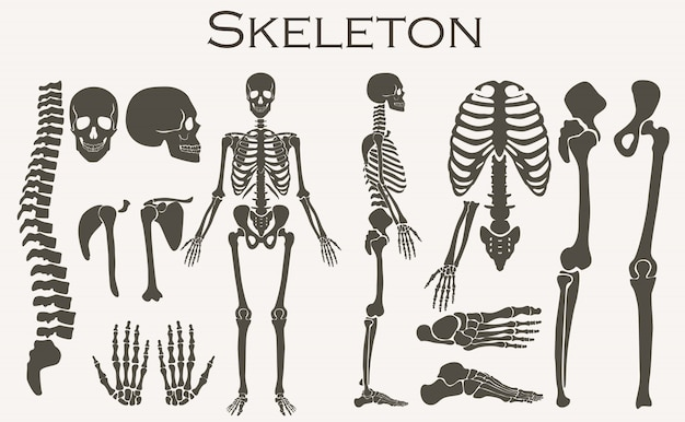 Scheletro di ossa umane