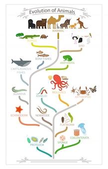 Schema di animali di evoluzione biologica