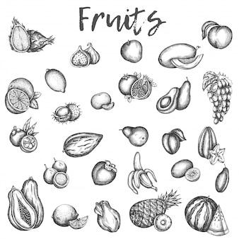 Schizzi di frutta isolati mela e melone, avocado e kiwi schizzo di icone vettoriali vinage di prugna, pesche e mango frutta disegnata a mano