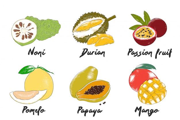 Schizzi di frutti esotici colorati disegnati a mano