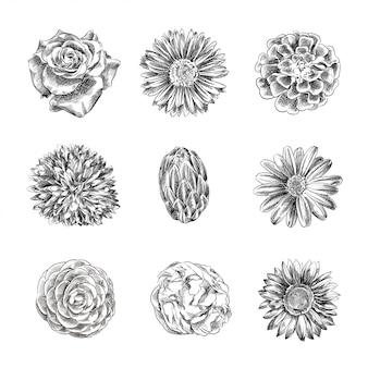 Schizzi disegnati a mano dei fiori, illustrazione