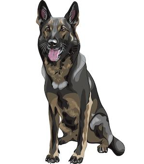 Schizzo a colori cane nero razza pastore tedesco