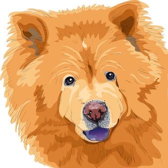 Schizzo di colore di una razza di cane chow-chow