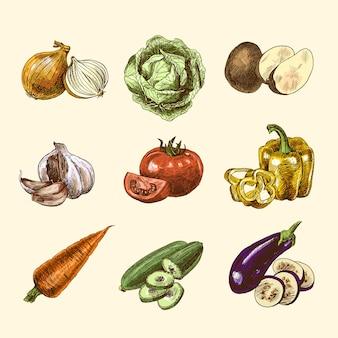 Schizzo di verdure colore impostato
