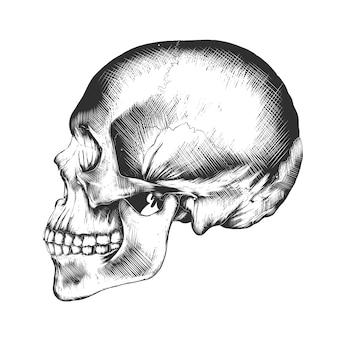 Schizzo disegnato a mano del teschio umano in bianco e nero