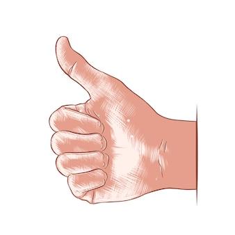 Schizzo disegnato a mano della mano come in colorato