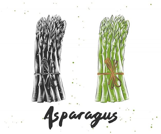 Schizzo disegnato a mano di asparagi