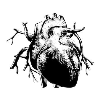 Schizzo disegnato a mano di cuore anatomico