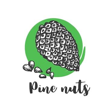 Schizzo disegnato a mano di noci di pino disegnare a mano d'epoca illustrazione vettoriale di semi e noci