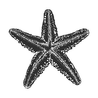 Schizzo disegnato a mano di stelle marine in bianco e nero