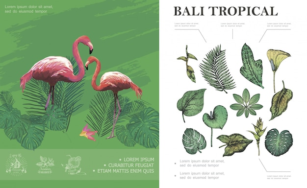 Schizzo il concetto tropicale di bali con fenicotteri bella palma banana monstera philodendron frangipani foglie e piante