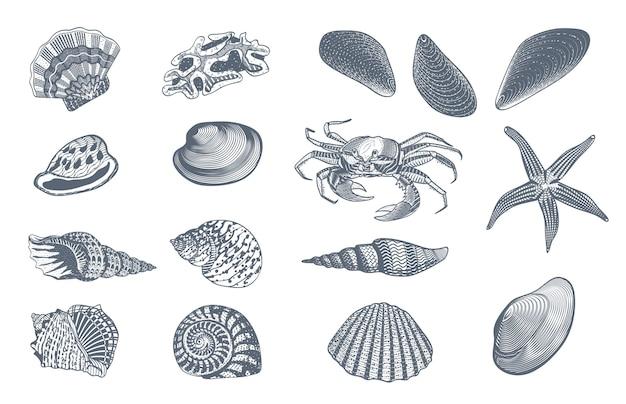 Schizzo ocean nature set