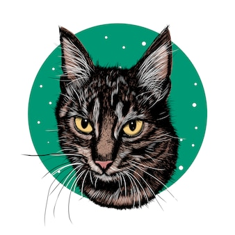 Schizzo realistico cat. fiore di schizzo realistico