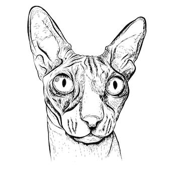 Schizzo realistico cat.