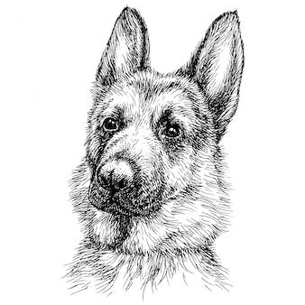 Schizzo ritratto di un bellissimo pastore tedesco.