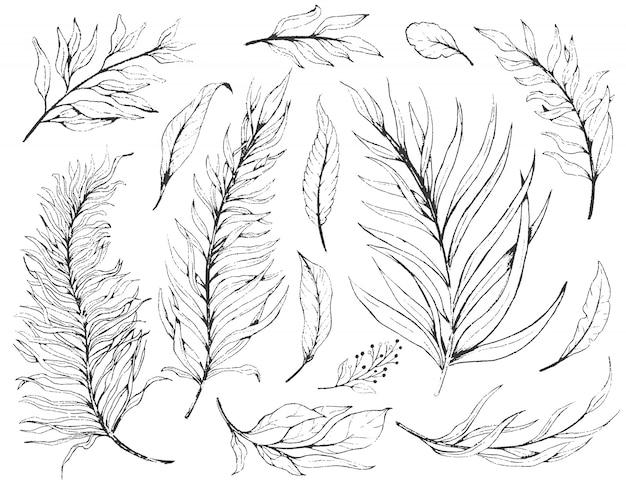 Schizzo set foglie di piante