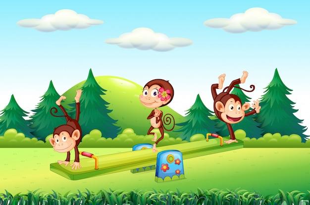 Scimmia al parco giochi