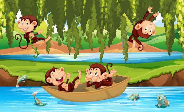 Scimmia allo stato selvatico