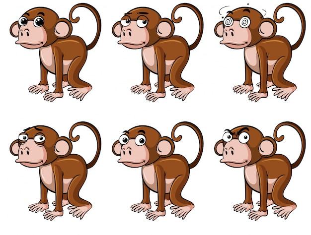 Scimmia con emozioni diverse