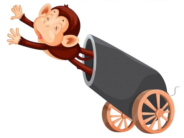 Scimmia e cannone morti