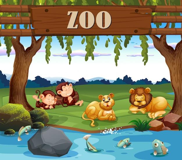 Scimmia e leone nello zoo