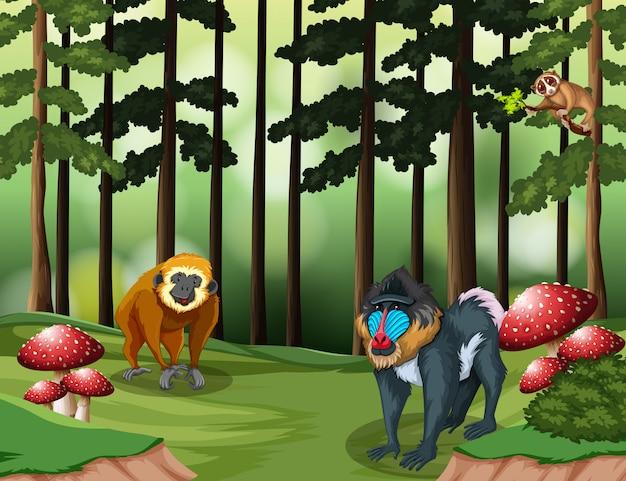 Scimmia nella foresta