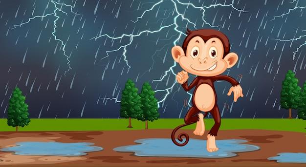Scimmia nella pioggia della natura