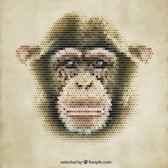 Scimmia poligonale