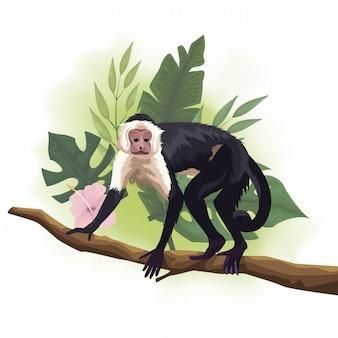 Scimmia selvaggia dei cappuccini nella scena del ramo di albero