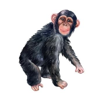 Scimmia variopinta dello scimpanzè isolata. acquerello