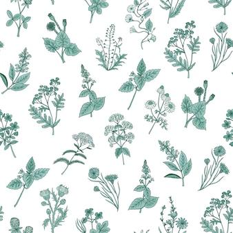 Seamless pattern di erbe mediche