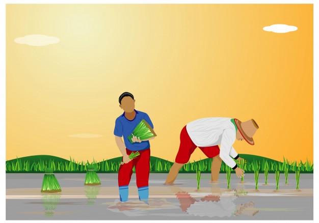 Semina del riso del trapianto dell'agricoltore nella progettazione di vettore del campo della risaia