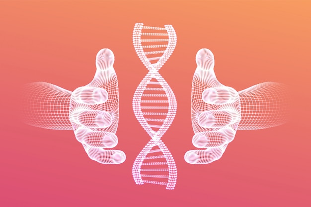 Sequenza di dna nelle mani. maglia metallica della struttura delle molecole di codice del dna di wireframe.