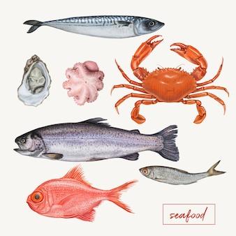 Serie di illustrazioni di frutti di mare