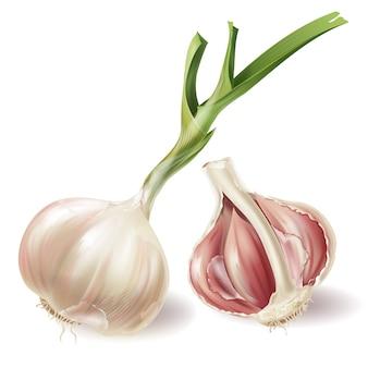 Set con testa d'aglio germogliato e metà della lampadina in bucce, isolato su sfondo bianco
