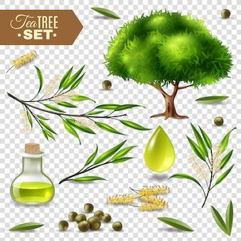Set dell'albero del tè