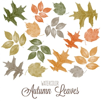 Set di acquerello colorato foglie d'autunno