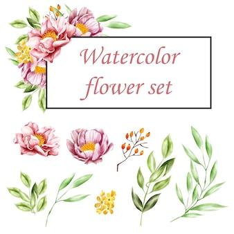 Set di acquerello floreale