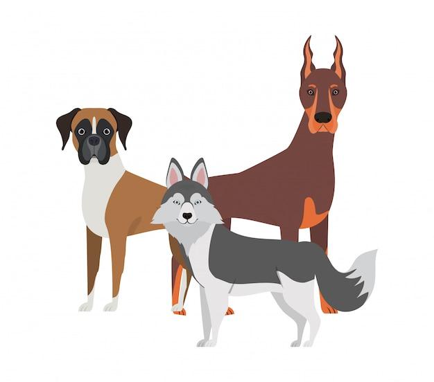 Set di adorabili cani su bianco