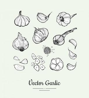 Set di aglio il chiodo di garofano isolato vettore bianco nero disegnato a mano, teste, ha tagliato l'illustrazione dell'aglio. illustrazione disegnata a mano dell'aglio dei pantaloni a vita bassa