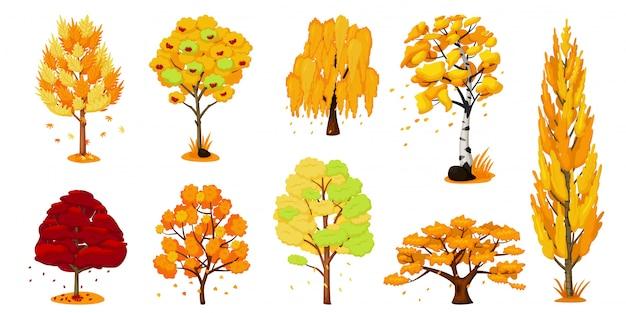 Set di alberi autunnali. quercia, betulla, acero
