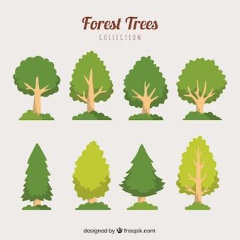 Set di alberi e pini