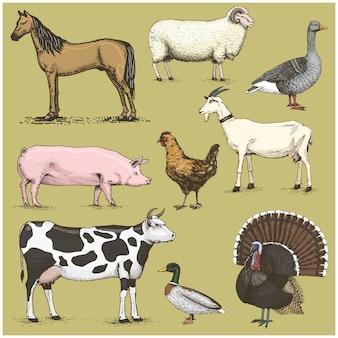 Set di animali domestici d'epoca incisi, cavallo e pecora, mucca. pollo. capra tacchino. maiale. anatra con oca