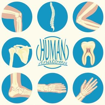 Set di articolazioni umane