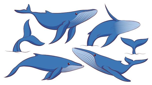 Set di balena blu disegnata a mano