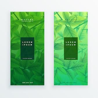 Set di banner di foglie verdi eco